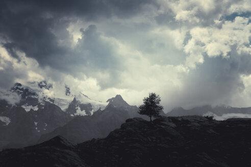 Italy, Lombardy, Lanzada, single tree on mountain - DWIF00815