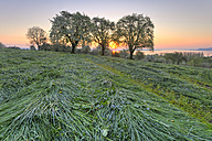 Germany, Baden-Wuerttemberg, Lake Constance, sunrise above meadow with trees - SHF01907