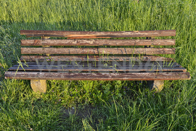 Overgrown bench in meadow - SHF01910