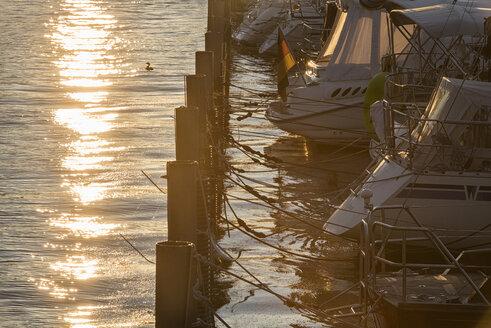 Germany, Lindau, Lake Constance, moored boats in backlight - SHF01922