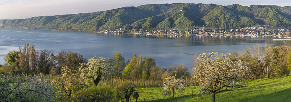 Germany, Bodman, Lake Constance, meadow with blossoming trees in morning light - SHF01925