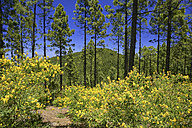 Spain, Tenerife, flowers in bloom near El Teide - DSGF01339