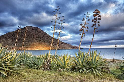Spain, Natural Park of Cabo de Gata-Nijar, Playa de los Genoveses - DSGF01353