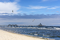 Germany, Usedom, Heringsdorf, beach, seagulls and pier - SIEF07217