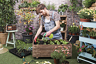 Young man spraying container with tomatoe plants, pepper plants and lettuce in the urban garden - RTBF00578