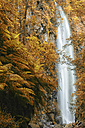 Spain, Canary Islands, La Palma, Los Tilos Biosphere Reserve, Laurel forest and waterfall - DSGF01377