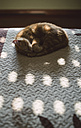 Cat sleeping on a bed at home - RAEF01603