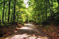 USA, North Carolina, Blue Ridge Mountains, forest track - SMAF00620