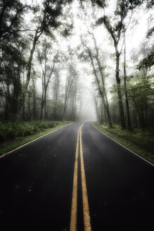 USA, Virginia, empty Blue Ridge Parkway at mist - SMAF00638