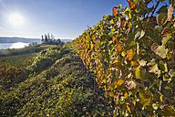 Germany, Ueberlingen, vineyards in autumn - SHF01942