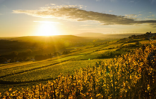 Germany, Rhineland-Palatinate, vineyard in autumn at sunset - BTF00464