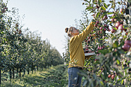 Young woman harvesting apples - KNSF00713