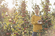 Young woman harvesting apples - KNSF00716