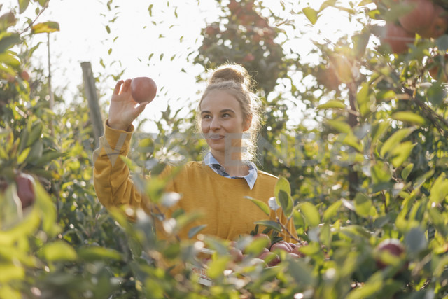 Young woman harvesting apples - KNSF00722 - Kniel Synnatzschke/Westend61