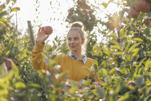 Young woman harvesting apples - KNSF00722