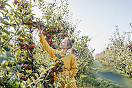 Young woman harvesting apples - KNSF00734
