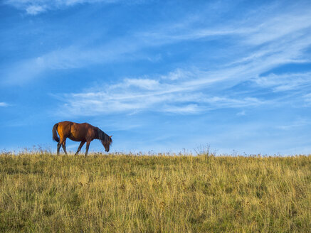 Horse grazing on pasture on a sunny day in autumn - LOMF00463