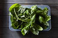 Box of fresh basil - KSWF01776