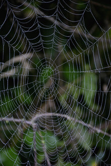 Abandoned spiderweb with dewdrops - AXF00792