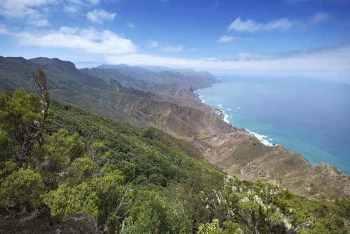 Spain, Canary islands, Tenerife, Anaga mountains - DHCF00017