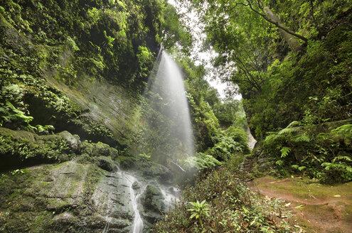 Spain, Canary Islands, La Palma, Los Tilos, waterfall - DHCF00020