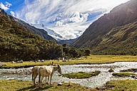Peru, Andes, Cordillera Blanca, Huascaran National Park, donkeys at river Quebrada Demanda - FOF08512