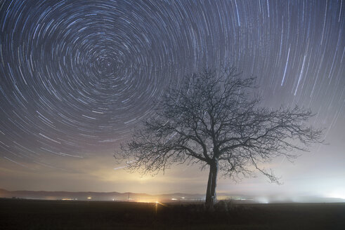 Star trails over a lonely tree - DHCF00022