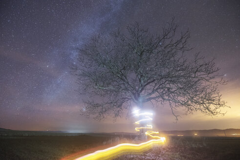 Milky way and light painting tree - DHCF00025