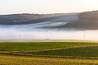 Germany, Baden-Wuerttemberg, Tauberbischofsheim, rural landscape with ground fog - EGBF00165