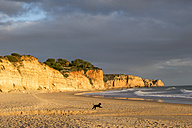 Portugal, Algarve, Lagos, dog on empty beach - NDF00624