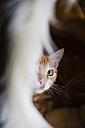 Hiding cat - RAEF01640