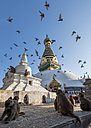 Nepal, Himalaya, Kathmandu, Swayambhunath Stupa with monkeys and birds - ALR00780