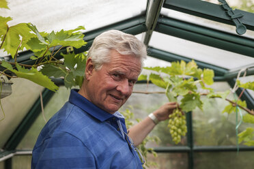 Portrait of senior man in greenhouse cultivating vine - PAF01751