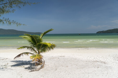Cambodia, Koh Rong Sanloem, Saracen Bay, beach with palm - PCF00310