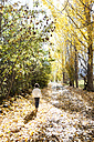 Back view of little boy walking on autumnal country road - VABF01023