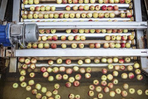 Apples in factory on conveyor belt - ZEF12420