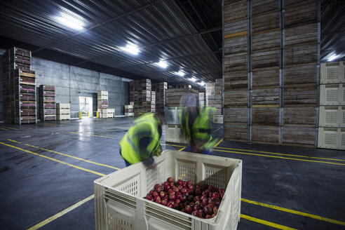 Two workers inspecting apples in distribution warehouse - ZEF12456