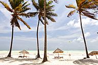 Tanzania, Zanzibar Island, Paje, palm trees moved by the wind - DSGF01424