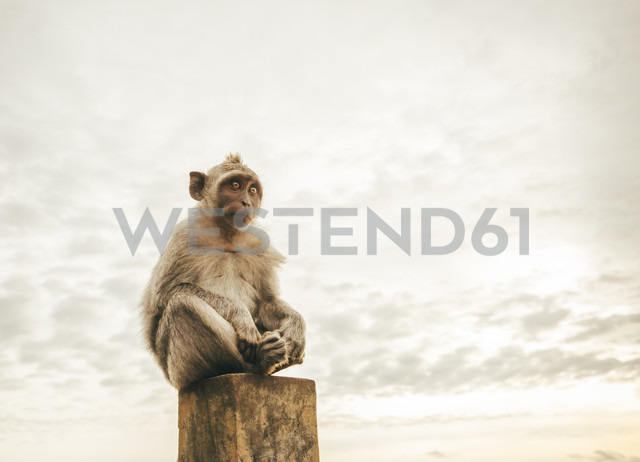 Indonesia, Bali, monkey sitting on a stone - MBEF01428
