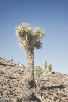 USA, California, Death Valley National Park, cactus - EPF00299
