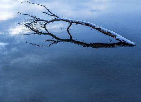 Austria, Linz, Weikerlsee, tree trunk in water - EJWF00835