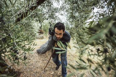 Spain, man pulling net in olive grove - JASF01488