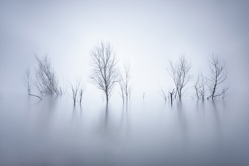 Bare trees standing in lake at wintertime - XCF00131
