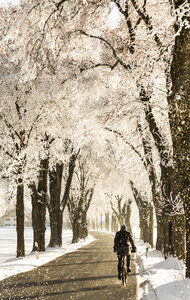 Germany, Bavaria, cyclist on treelined country road in winter - FCF01160
