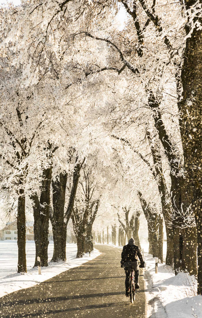 Germany, Bavaria, cyclist on treelined country road in winter - FCF01160 - Christina Falkenberg/Westend61