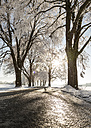 Tree-lined road in winter - FCF01162