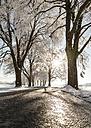 Tree-lined road in winter - FCF01162
