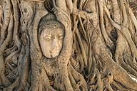 Thailand, Ayutthaya, Buddha head in between tree roots at Wat Mahathat - PCF00317