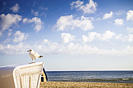 Germany, Usedom Island, Ahlbeck, seagull standing on hooded beach chair at sunlight - PUF00587