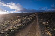 Spain, Tenerife, dirt road in backlight - SIPF01401